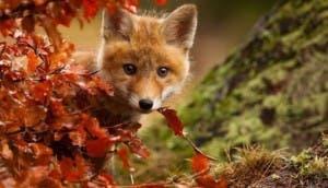 Animales-otoño