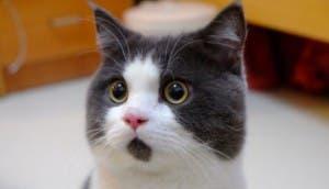 Gato-sorprendido