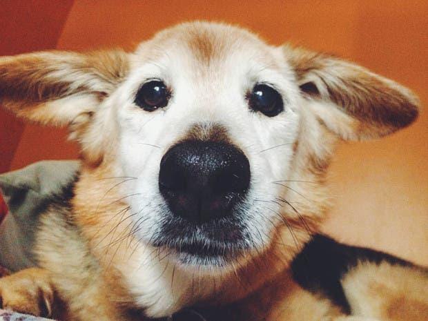 adios perro12