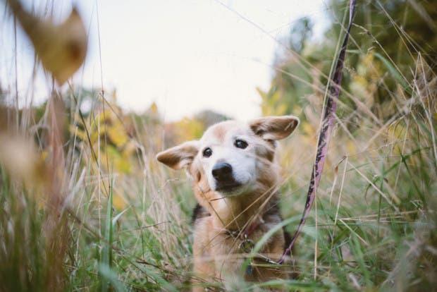 adios perro16