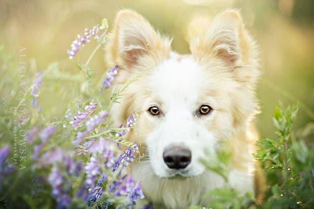 animals-dog-photography-alicja-zmyslowska-18