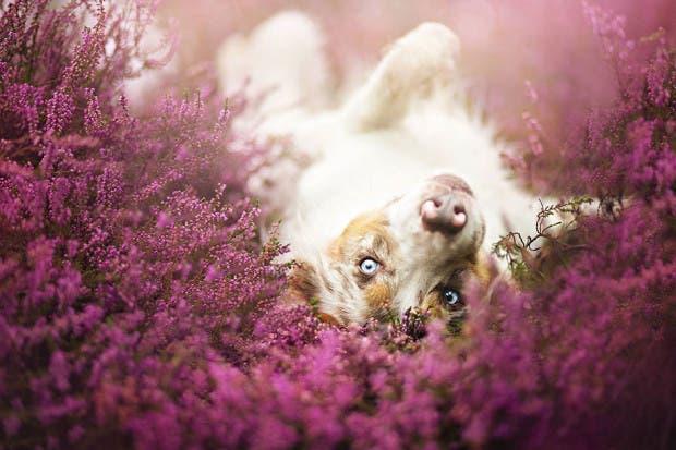 animals-dog-photography-alicja-zmyslowska-20