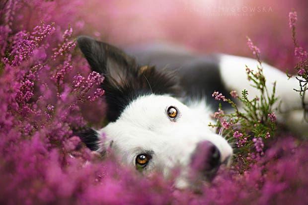 animals-dog-photography-alicja-zmyslowska-4