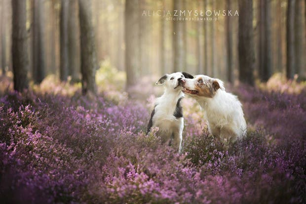 animals-dog-photography-alicja-zmyslowska-7
