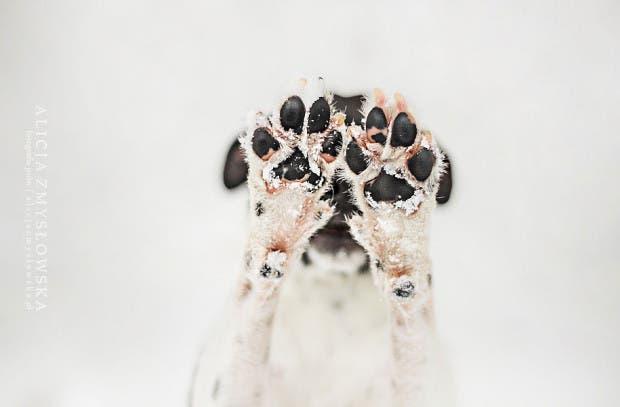 animals-dog-photography-alicja-zmyslowska-8