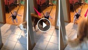 bebe-saltando-perro