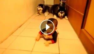 bebes-perros-gateando-play