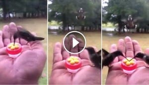 colibri-play