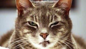 evil-cats6-e1414984961193