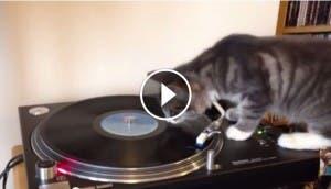 gato-dj-play
