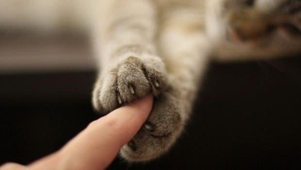 gatos momentos10