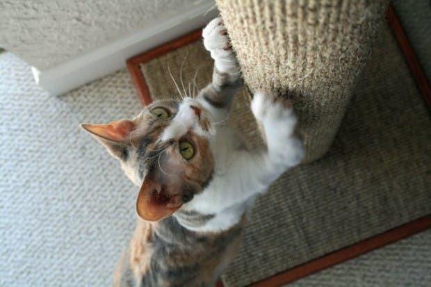 gatos momentos11