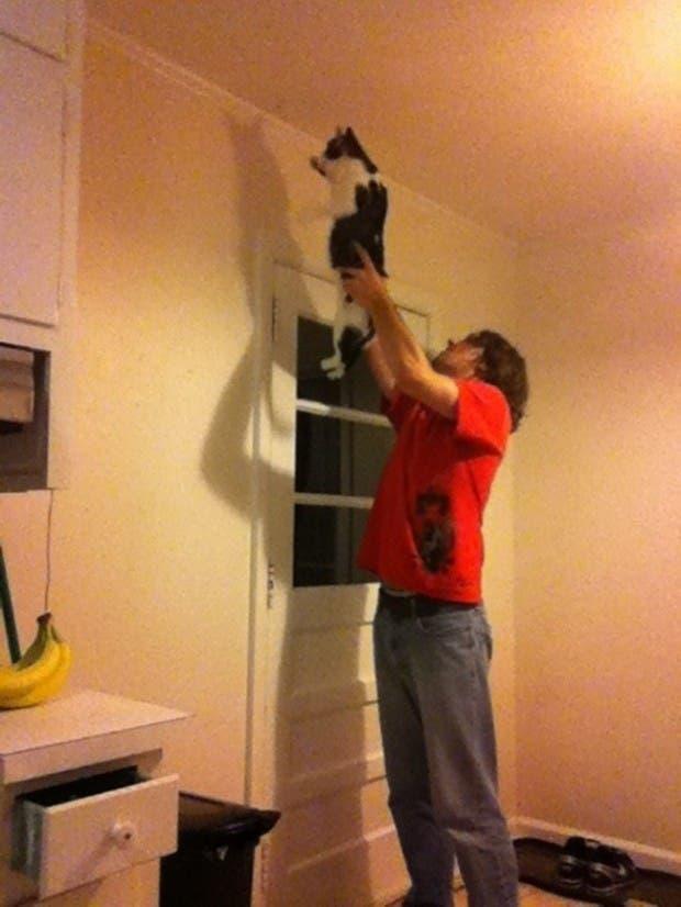 gatos momentos15