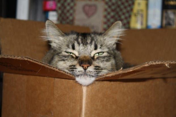 gatos momentos17