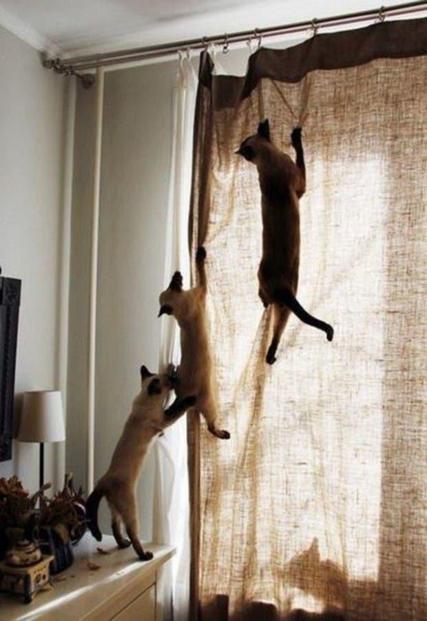 gatos momentos19