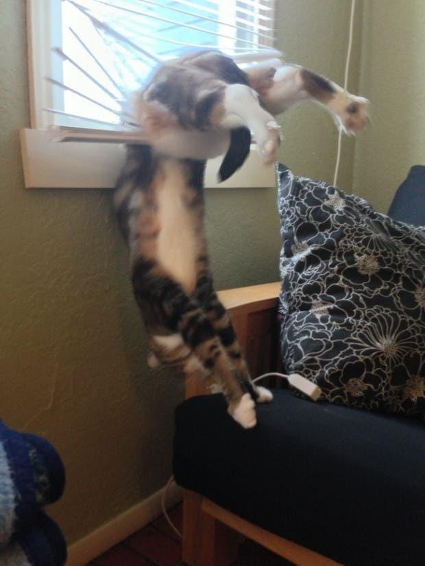 gatos momentos20