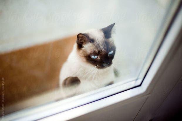 gatos momentos21