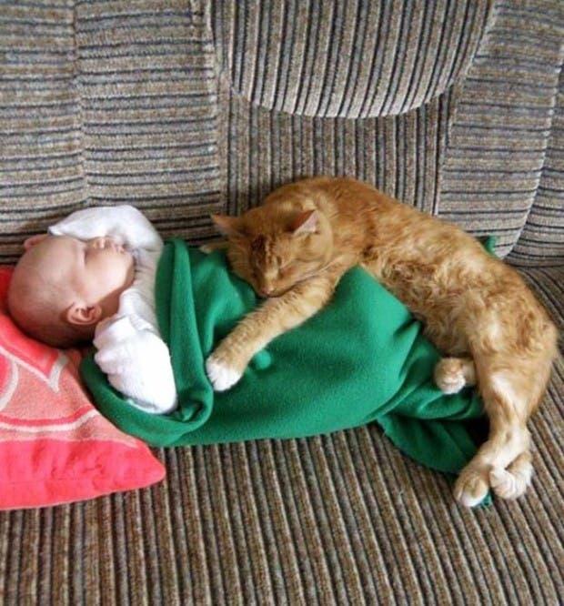 gatos momentos25