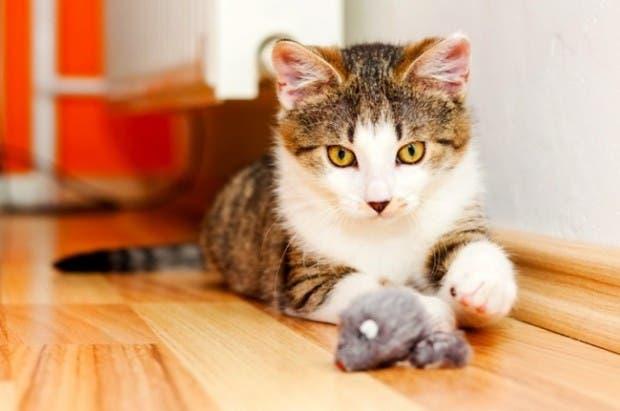 gatos momentos3