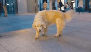 muere-ney-perro-a-coruna-1