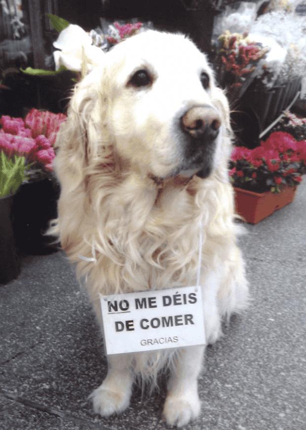 muere-ney-perro-a-coruna-3