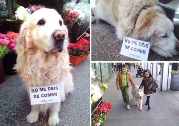 muere-perro-ney-plaza-de-lugo-coruna