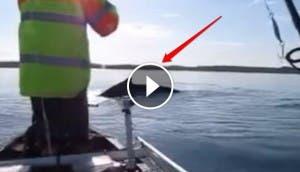 naturaleza-video-ballena3