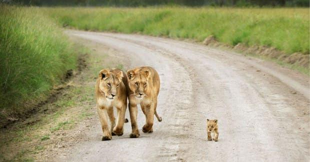 papas animales3