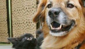 perro-cuida-gato2