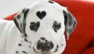 perro-extranos-nacimiento