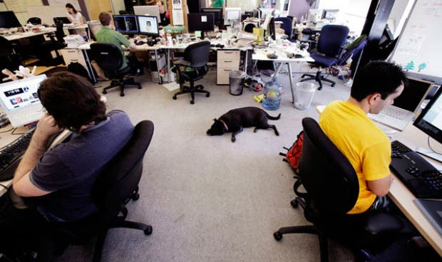 perros-en-la-oficina (2)