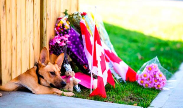 perros esperan14