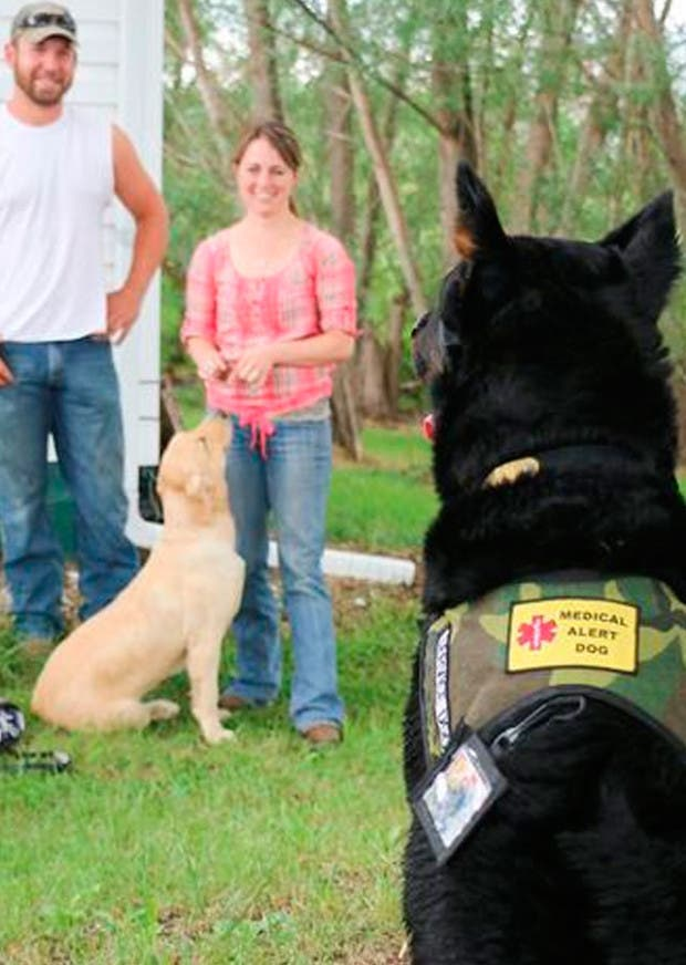 perros-que-huelen-gluten