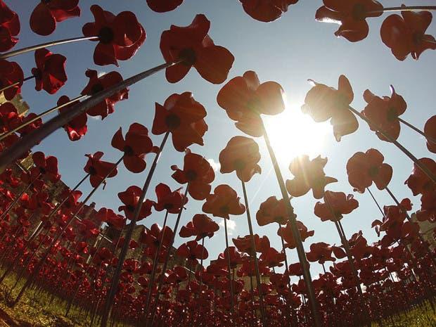 poppies10
