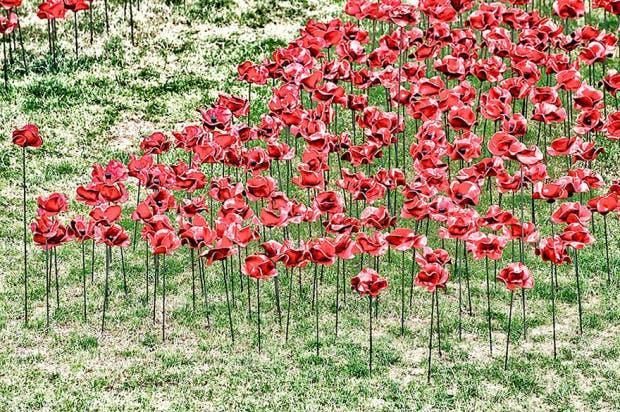 poppies9