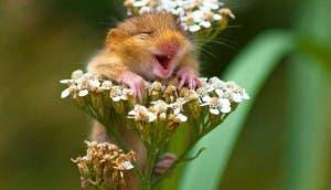 ratoncitos-tiernos