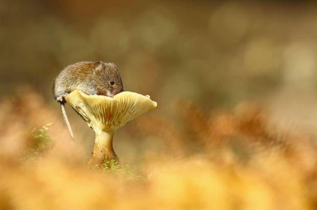 ratoncitos15