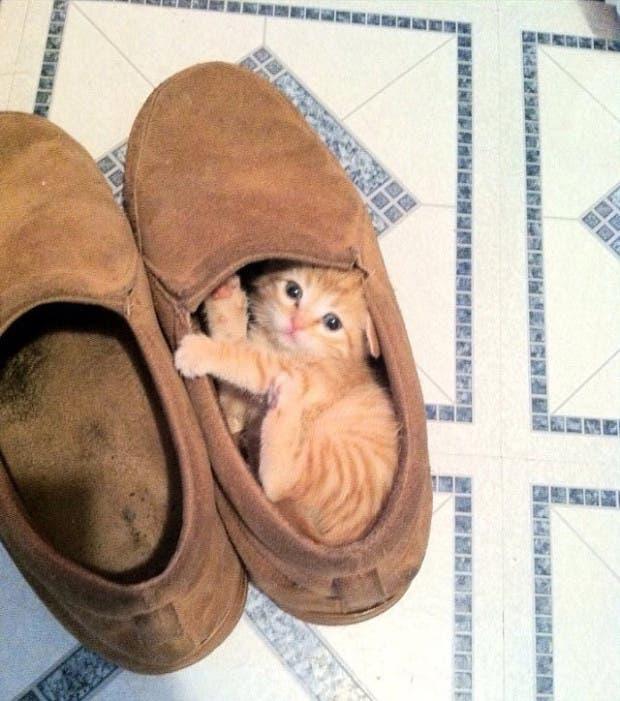 Ummm-someone-stole-my-shoe