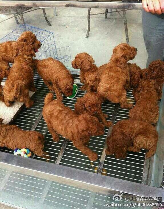 Wait-fried-chicken