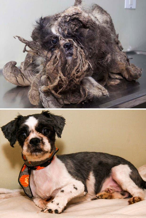 ad perros rescatados1