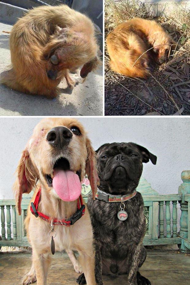 ad perros rescatados17