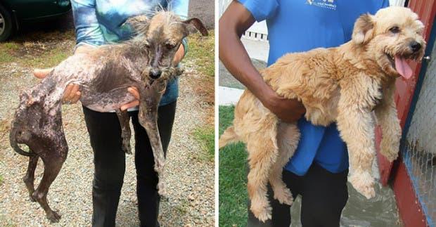 ad perros rescatados19