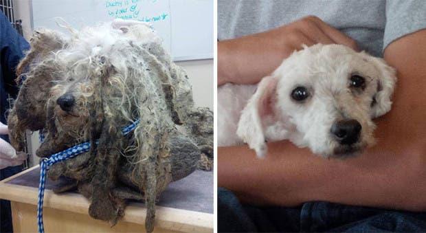 ad perros rescatados21