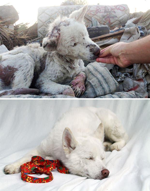 ad perros rescatados3