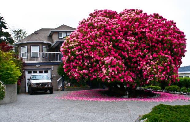 arboles mas hermosos del mundo1