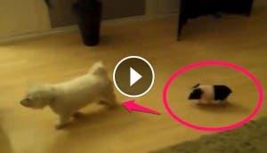 cerdito-sigue-perro-play