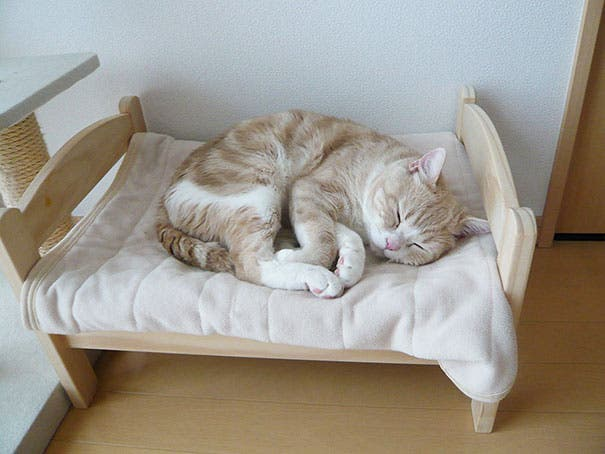 duktig-japanese-cat-bed-ikea-1