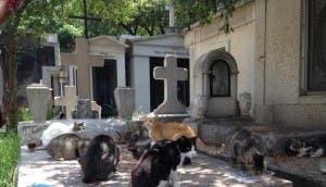 gatos en el panteon frances