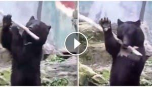 oso-kung-fu-panda