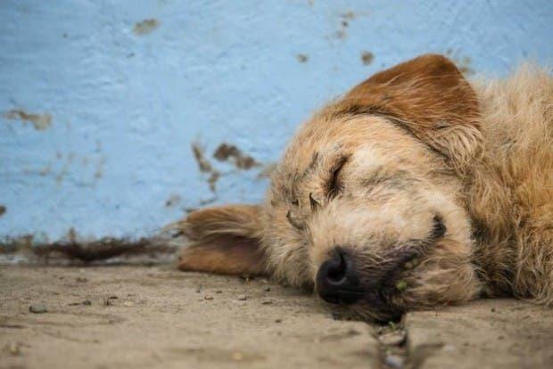 perro callejero2